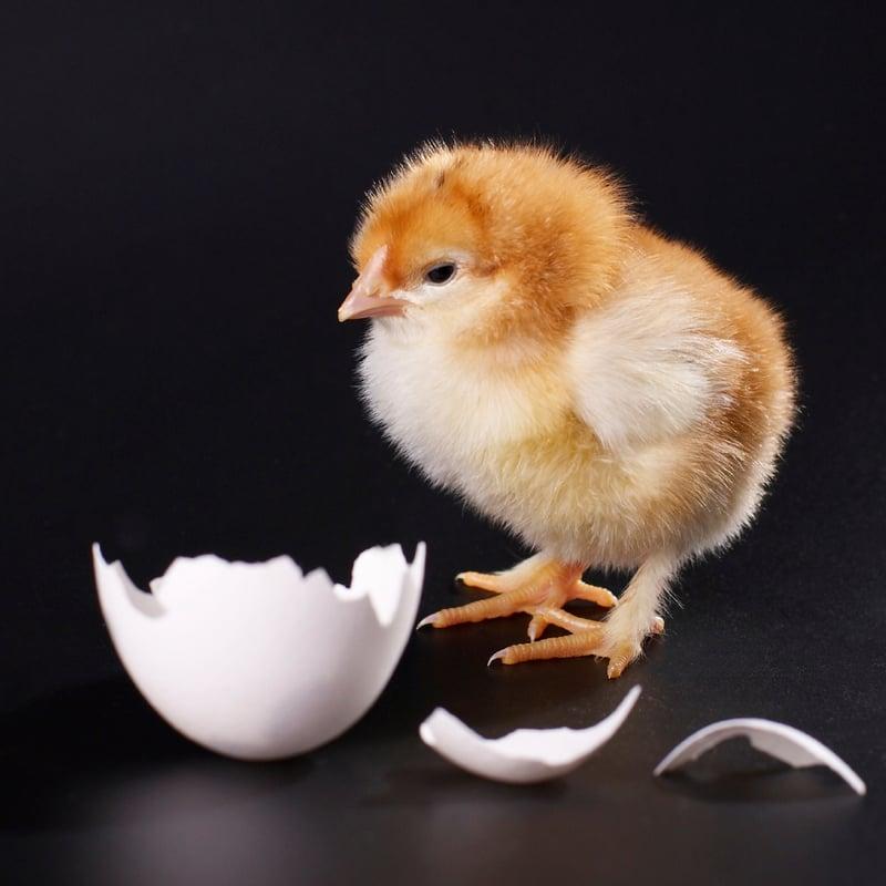 Открыток, картинки с яйцом и цыпленком