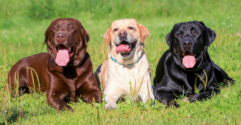 We Know What Dog Breed You Are Based On Your Personality