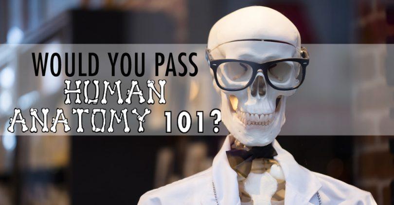 Would You Pass Human Anatomy 101 Magiquiz