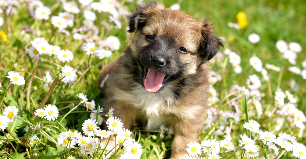 Which Hybrid Dog Breed Matches Your Personality? | MagiQuiz