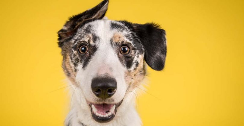 How To Find The Perfect Dog Name Quiz