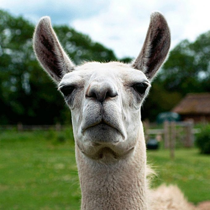 Can We Guess Your Zodiac Sign From These Awkward Animals ...